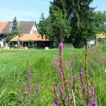 Seeholz-Beizli mit Garten