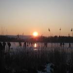 seegfroerni_2012 (29)